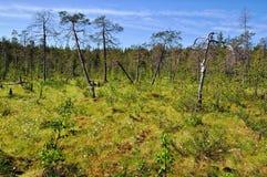 Tierra baja pantanosa Imagen de archivo libre de regalías