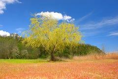 Tierra coloreada Imagen de archivo