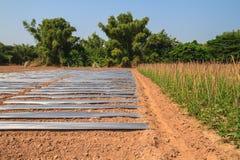 Tierra con la granja larga plástica de la protección y de la haba de la yarda Imágenes de archivo libres de regalías