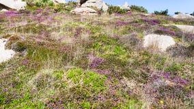 tierra con los cantos rodados en el sitio de Ploumanach Fotos de archivo