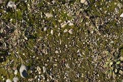Tierra cubierta de musgo Foto de archivo