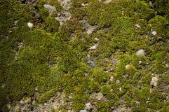 Tierra cubierta de musgo Foto de archivo libre de regalías