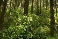 Tierra de bosques maderables Imagen de archivo libre de regalías