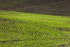 Tierra de cultivo Foto de archivo libre de regalías