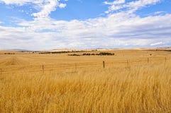Tierra de cultivo - Burra Fotos de archivo libres de regalías