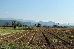 Tierra de cultivo hermosa Imagen de archivo libre de regalías