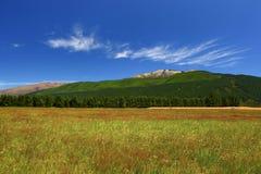 Tierra de cultivo de Nueva Zelanda en un día de veranos hermoso Fotos de archivo libres de regalías