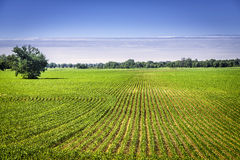 Tierra de cultivo orgánica con filas Imágenes de archivo libres de regalías