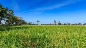 Tierra de cultivo y la palma de azúcar en Tailandia en la provincia de Nonthaburi almacen de video