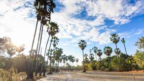 Tierra de cultivo y la palma de azúcar en Tailandia en la provincia de Nonthaburi almacen de metraje de vídeo