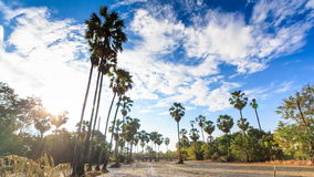 Tierra de cultivo y la palma de azúcar en Tailandia en la provincia de Nonthaburi metrajes