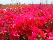 Tierra de flores Fotografía de archivo libre de regalías