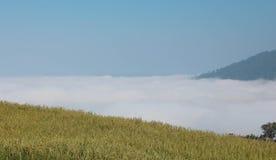 Tierra de la altura del negro del arroz de la granja Foto de archivo