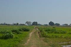 tierra de la cosecha con el campo verde de la agricultura imágenes de archivo libres de regalías
