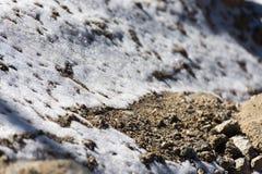 Tierra de la cubierta de nieve Foto de archivo libre de regalías
