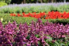 Tierra 26 de la flor Foto de archivo libre de regalías