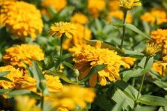 Tierra 27 de la flor Fotos de archivo libres de regalías