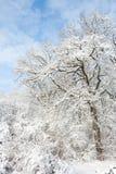 Tierra de la maravilla del invierno - en el parque Fotos de archivo