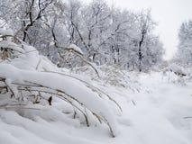 Tierra de la nieve Imagen de archivo libre de regalías
