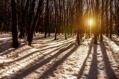 Tierra de la nieve de la fantasía imagen de archivo libre de regalías