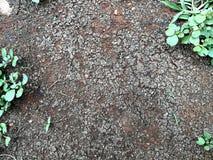 Tierra de la suciedad e hierba verde foto de archivo libre de regalías