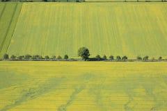 Tierra de labrantío Fotografía de archivo libre de regalías