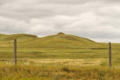 Tierra de pasto del balanceo punteada con las vacas Fotografía de archivo
