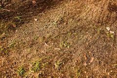 Tierra del barrido con la hierba Imágenes de archivo libres de regalías