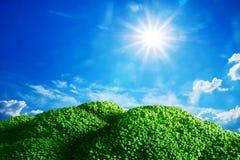 Tierra del bróculi debajo del cielo soleado azul Imágenes de archivo libres de regalías