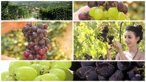 Tierra del collage del vino almacen de metraje de vídeo
