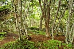 Tierra del Fuego Stockfotografie