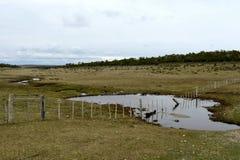 Tierra del Fuego Stockfotos