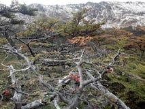 Tierra del Fuego - Chile Imagen de archivo libre de regalías