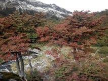 Tierra del Fuego - Chili Stock Foto's