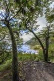 Tierra del Fuego - l'Argentina immagine stock