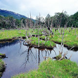Tierra del Fuego National Park, Argentina Royalty Free Stock Photo