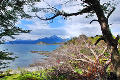 Tierra del Fuego National Park. Is a national park on the Argentine part of the island of Tierra del Fuego in the ecoregion of Patagonic Forest and Altos Andes royalty free stock photography