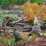 Tierra del Fuego National Park, la Argentina Fotografía de archivo libre de regalías