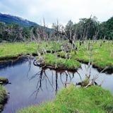 Tierra del Fuego National Park, la Argentina Foto de archivo libre de regalías