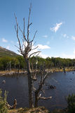 Tierra del Fuego National Park lake Royalty Free Stock Image