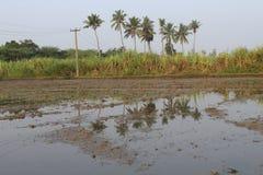 Tierra del granjero del pueblo con el árbol de la caña de azúcar y de coco imagenes de archivo