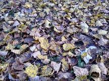 Tierra del otoño Fotografía de archivo libre de regalías