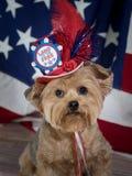 Tierra del perro patriótico libre Imagenes de archivo