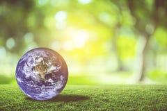 Tierra del planeta hermosa en hierba verde con el fondo del bokeh de la falta de definición de la naturaleza Imagen de archivo