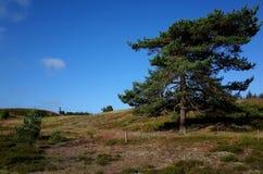 Tierra en el verano Foto de archivo libre de regalías