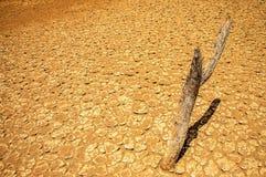 Tierra estéril del desierto Fotografía de archivo libre de regalías