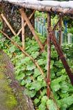 Tierra fresca de la planta Imagen de archivo libre de regalías