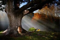 Tierra mágica del bosque Fotos de archivo