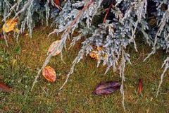 Tierra mojada de la hierba Imagenes de archivo