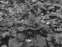 Tierra mojada de las plantas imágenes de archivo libres de regalías